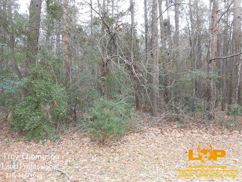 40.18+/- Acres Of Land And Timber : Olla : La Salle Parish : Louisiana