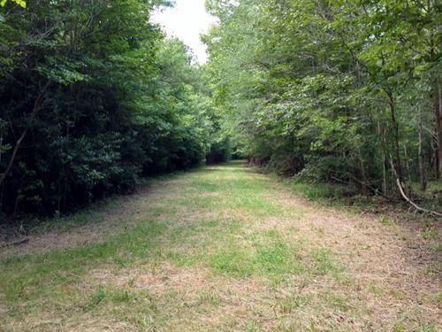 Mature Timber, Bartrum Creek : Elberton : Elbert County : Georgia