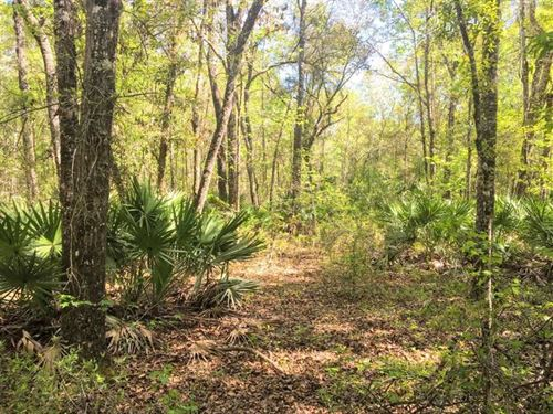 41 Acres Land For Sale in Camden : Waverly : Camden County : Georgia