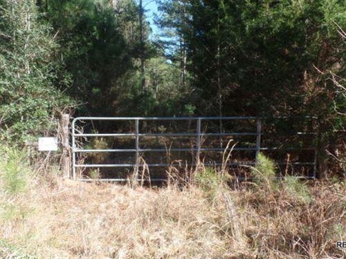 53.8 Ac, Mixed Timber Hunting Trac : Jasper : Texas