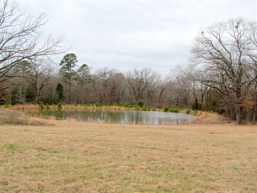 Almost 16 East Texas Acres : Winnsboro : Wood County : Texas