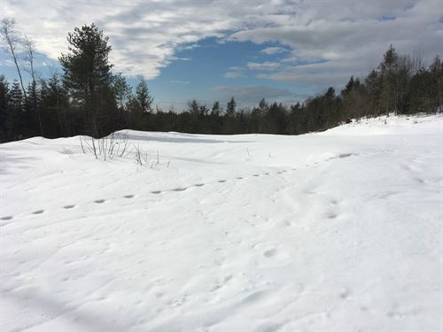 Hill Top Views Maine Land Sale : Dover-Foxcroft : Piscataquis County : Maine