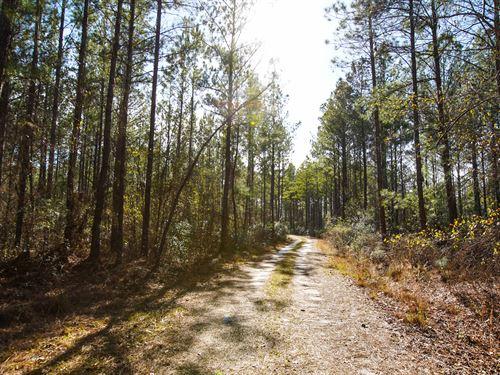 Devils Branch : Newington : Effingham County : Georgia