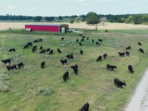 Rare 900+ Acre Working Cattle Ranch : Centerville : Leon County : Texas