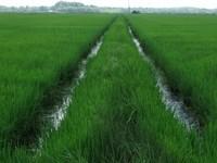 Mississippi Delta Farm 916 Ac : Sledge : Panola County : Mississippi