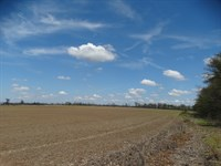Ag Tract 90 Acres Rice Land : West Memphis : Crittenden County : Arkansas