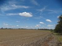 Ag Tract 90 Acres Rice Land : Proctor : Crittenden County : Arkansas