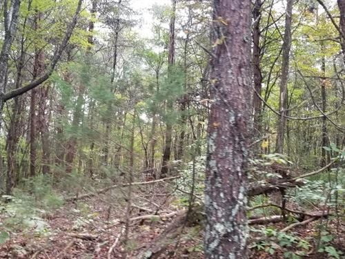 34.35+/-Acres Near Fall Creek Falls : Dunlap : Bledsoe County : Tennessee