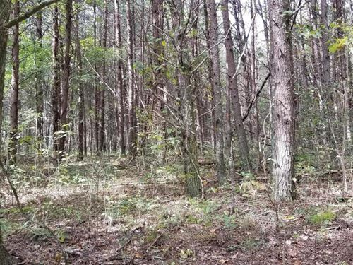 46.16+/- Acres Hunting Property : Dunlap : Bledsoe County : Tennessee