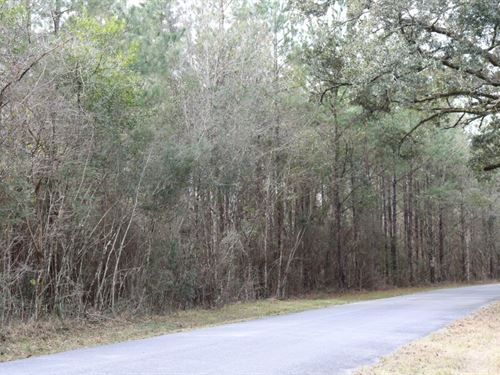 17.5 Acres In George County In Luce : Lucedale : George County : Mississippi