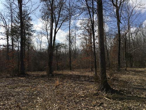Hunting Land Deer, Turkey Woods : Pocahontas : Randolph County : Arkansas