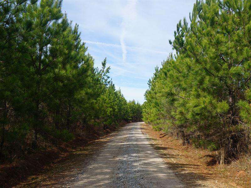 Cedar Creek Timberlands : Monticello : Jasper County : Georgia