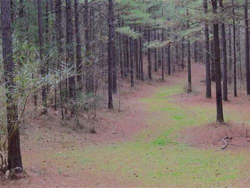 Snow Springs Tract 453 ac Ad : Adairsville : Bartow County : Georgia