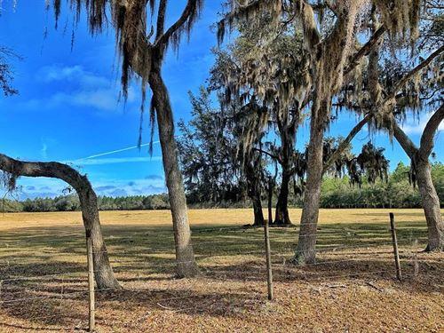 15 Acres Cross City, Fl, Dixie : Cross City : Dixie County : Florida