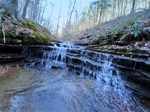Excellent Wooded Recreational Tract : Charlotte : Dickson County : Tennessee
