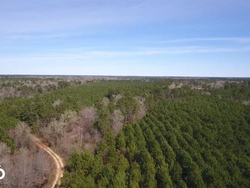 106 Acre Hunting/Timber Tract : Livingston : Polk County : Texas