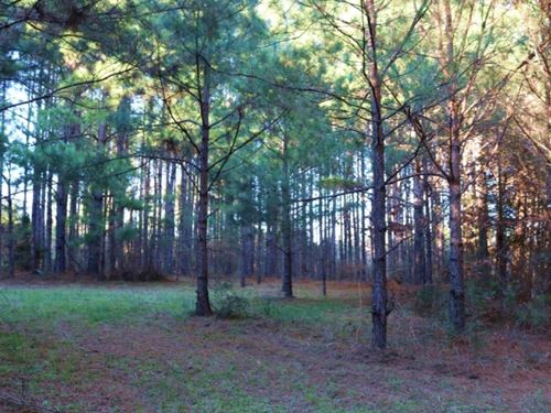 148 Acres In Newton County In Hicko : Hickory : Newton County : Mississippi