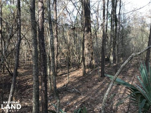 216 Acres Deer Hunting And Timber : Pioneer : West Carroll Parish : Louisiana