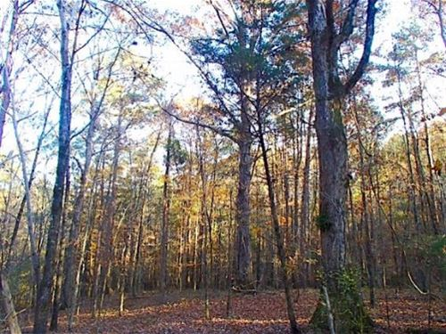 21.5 Acres In Neshoba County In Phi : Philadelphia : Neshoba County : Mississippi