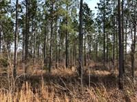Hunting Timber Tract : East Dublin : Laurens County : Georgia