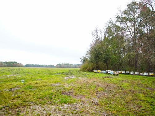 Duncan Hand Farm : Hazlehurst : Jeff Davis County : Georgia