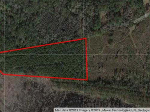 10 Acres in Camden County, GA : Waverly : Camden County : Georgia