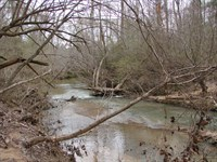 High-Quality Timber Great Hunting : West Blocton : Bibb County : Alabama