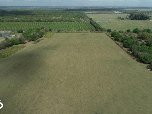 Arcadia Farmland Country Homesite : Arcadia : Desoto County : Florida