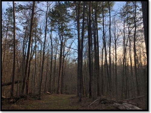 295 Acres With A Cabin In Holmes CO : Durant : Holmes County : Mississippi