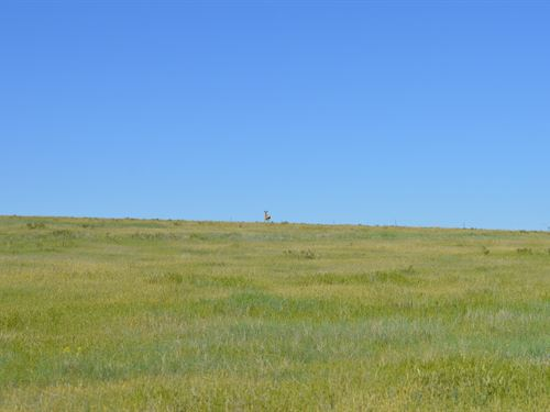 Crp Land in Kit Carson County : Flagler : Kit Carson County : Colorado