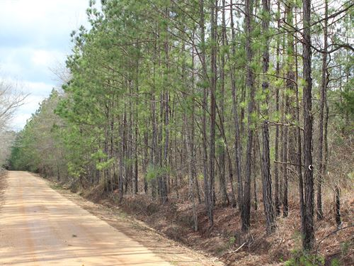 Quiet Country Property Near Auburn : Auburn : Macon County : Alabama