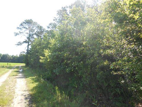 Hunting/Timber Tract Martin County : Jamesville : Martin County : North Carolina