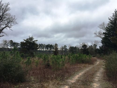 Crown Pine Tract 1250 : Chireno : Nacogdoches County : Texas