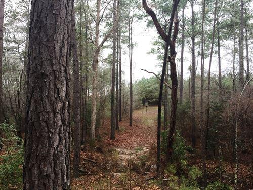 Crown Pine 4698 : Alto : Cherokee County : Texas