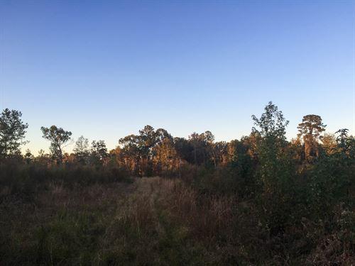 Ponley Lane West Tract : Cottageville : Colleton County : South Carolina