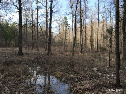 160 Ac, Creek Bottom Hunting With : Columbia : Caldwell Parish : Louisiana