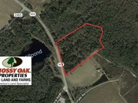 12.4 Acres of Hunting And Timber : Fairmont : Robeson County : North Carolina