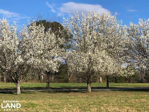 Pretty Branch Homesite And Recreati : Phil Campbell : Franklin County : Alabama