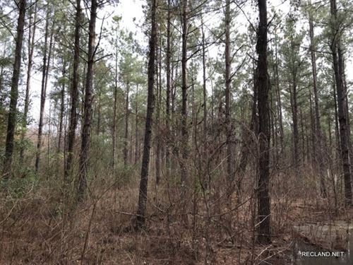 40 Ac, Pine Timberland & Hunti : Columbia : Caldwell Parish : Louisiana
