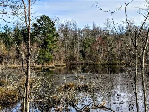 Excellent Deer Hunting Macon Count : Ideal : Macon County : Georgia