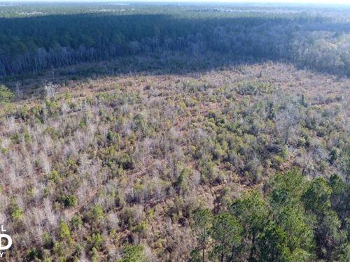 Bonneau National Forest Land : Cordesville : Berkeley County : South Carolina