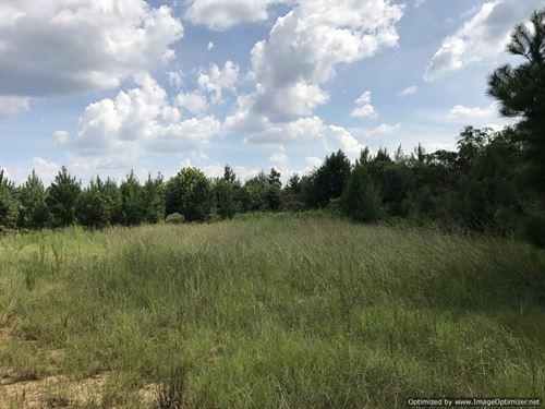 A True Hunting Refuge : Meadville : Franklin County : Mississippi