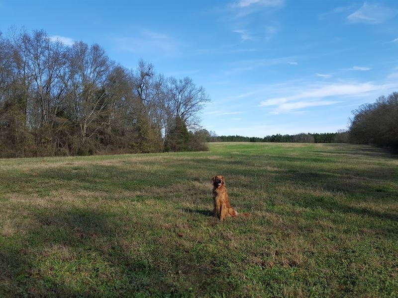 Lake Hartwell Homesite And Farm : Townville : Anderson County : South Carolina