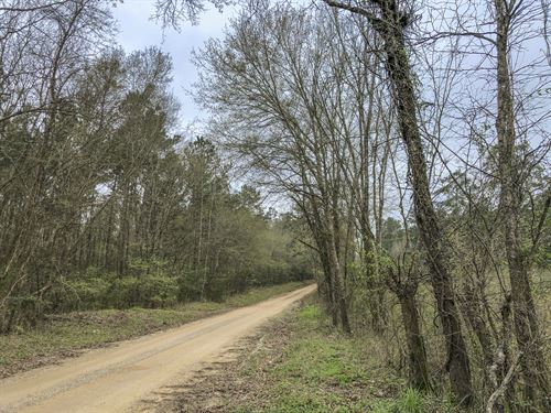 16 Ac Wilderness Road : Point Blank : San Jacinto County : Texas