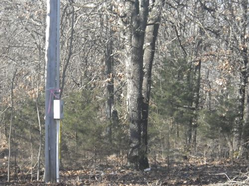 43 Acres Wooded Land, Peace Valley : Peace Valley : Howell County : Missouri