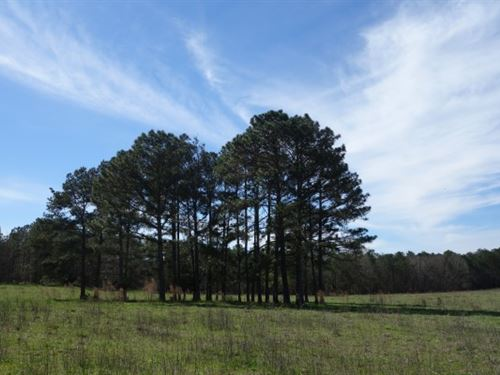41.24 Acres, Fairfield County : Blackstock : Fairfield County : South Carolina