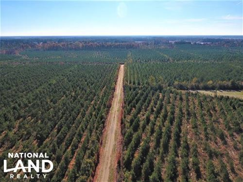 Pamlico Waterfront Tract : Bayboro : Pamlico County : North Carolina