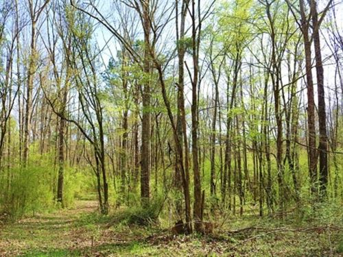 65 Acres In Hinds County In Raymond : Raymond : Hinds County : Mississippi