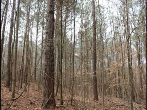 10.2 Acres In Neshoba County In Phi : Philadelphia : Neshoba County : Mississippi