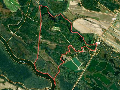 Timberland Tract For Sale Pitt Co : Greenville : Pitt County : North Carolina